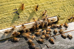 A lot of bees entering a beehive Stock Photos