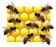 Lot of bees on honeycombs. Vector illustration Royalty Free Stock Image