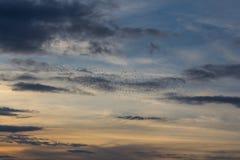 Birds at sundown Stock Photo