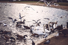 A lot of birds in park Stock Photo