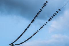 Birds on a powerline royalty free stock photography