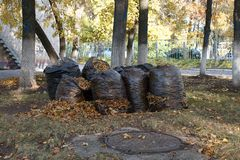 a lot of black garbage bags filled with fallen autumn leaves Royalty Free Stock Photos