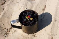 Lot blackberries in metal mug slay on sand. Tourism, camping, travel. Gathering Stock Image