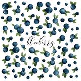 A lot of blue berries with leaves, blueberries, postcard stock illustration