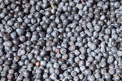 A lot of blueberries Royalty Free Stock Photos