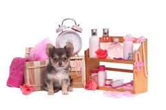A lot of body care accessories and Chihuahua puppy Royalty Free Stock Images