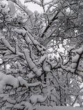 A lot of branches in heavy snow. Lot branches heavy snow winter royalty free stock photo
