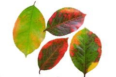 Lot of bright colored leaves of the tree template on white isol Stock Images
