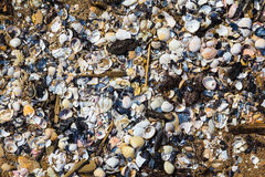 A lot of broken shells washed out Baltic sea shor Royalty Free Stock Photo