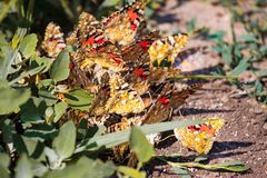 Lot of butterflies around the nest in the summer stock image