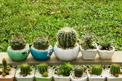 A lot of cactuses and succulents in colorful plant pots. stock photo