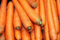 Lot of carrots in groups. The sweetness of carrots allows the ve stock photography