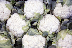Lot of cauliflowers packed together. For sale Royalty Free Stock Photography