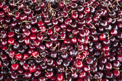 A lot of cherries Royalty Free Stock Photos
