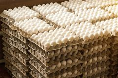 A lot of chicken eggs in the trays, sorting of chicken eggs, farm. A lot of chicken eggs in the trays, sorting of chicken eggs royalty free stock photography