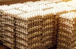 A lot of chicken eggs in the trays, sorting of chicken eggs, chicken. A lot of chicken eggs in the trays, sorting of chicken eggs, food stock photos