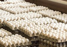 A lot of chicken eggs in the trays, sorting of chicken eggs, industry. A lot of chicken eggs in the trays, sorting of chicken eggs stock photos