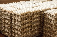 A lot of chicken eggs in the trays, sorting of chicken eggs, container. A lot of chicken eggs in the trays, sorting of chicken eggs royalty free stock photography