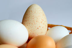 Lot of chicken and Turkey eggs are in one basket. A lot of chicken and Turkey eggs are in one basket Stock Photography