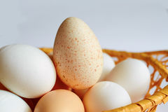 Lot of chicken and Turkey eggs are in one basket. A lot of chicken and Turkey eggs are in one basket Royalty Free Stock Images