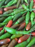A lot of Chili have Green chili Red chili and Multi color The background is Bird`s Eye Chilli, Chili Texture, Capsicum annuum, Pap. Rika,Thai Herbals, Thai Royalty Free Stock Photo