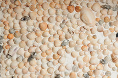Lot cockleshells arranged in a row Royalty Free Stock Photos