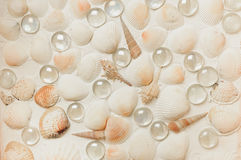 Lot cockleshells arranged in a row Stock Photography