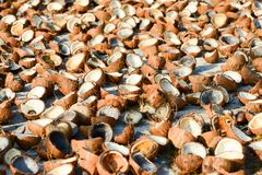 A lot of coconut meat and coconut shell on white concrete for natural drying. Tropical fruit cooking ingredient. Summer season,. Sunny day. Koh Mak Island royalty free stock photography