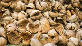 A lot of coconut shell weathered with close up photo take with brown color stock images