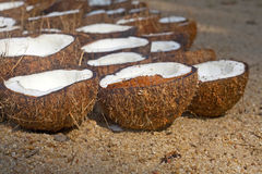 A lot of coconuts Stock Photos