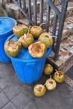 Coconuts in a trash Royalty Free Stock Image