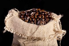 A lot of coffee beans Stock Image