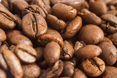 Lot of coffee Stock Photography