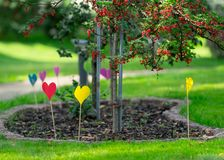 A lot of colorful paper hearts on wooden sticks in the garden royalty free stock photo