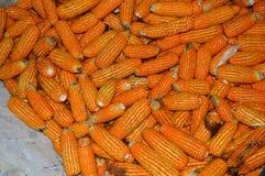 A lot of corn photos stock photos