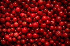 A lot of cowberries as background. Lot of cowberries as background Royalty Free Stock Images
