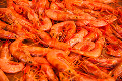 A lot of crayfish Royalty Free Stock Photo