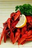 Lot of crayfish Stock Photography