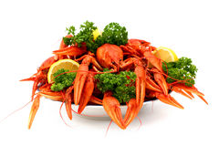 Lot of crayfish Royalty Free Stock Photography