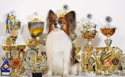With a lot of cups from competitions Stock Images