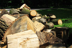 A lot of cutted firewood laying on the floor in park Stock Photos
