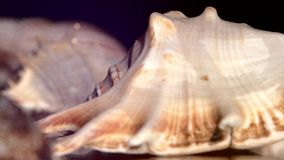 A lot of different sea shells on black, rotation stock footage