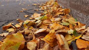 A lot of different yellow and green leaves. On the road. Autumn Royalty Free Stock Images