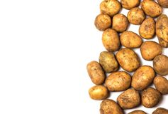 A lot of dirty potatoes on a white background. Potatoes scattered on the right side Stock Image