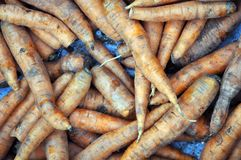 A lot of dirty ripe carrots Stock Photo