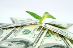 A lot of dollars and green sprout Royalty Free Stock Image