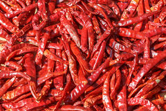 Lot of dried chili as a food background Royalty Free Stock Photos