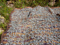 A lot of dried fish lying on a mat. On the grass background Royalty Free Stock Photo