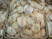 A lot of dried squid at market. A lot of dried squid at fresh market royalty free stock photos
