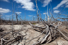 Lot of dry branches Royalty Free Stock Photography